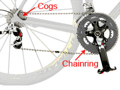 A combination of chainrings and cogs gives you a variety of gears.