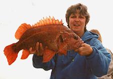 Big reds (vermilion rockfish) are often encountered on Half Moon Bay Sportfishing trips.