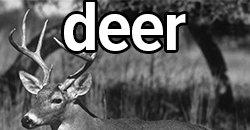 deer hunting catalog link