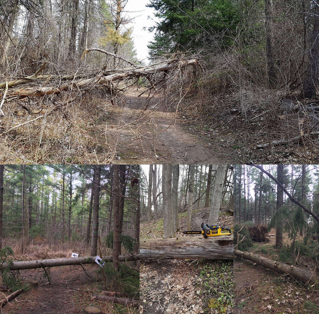 rees and debris littered the trails - we are almost done cleanup!