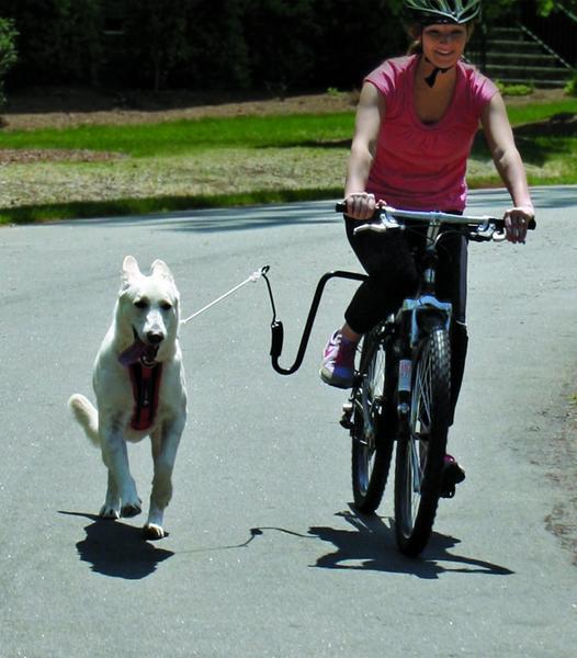 Springer The Original Springer (Dog Exerciser/Jogger)