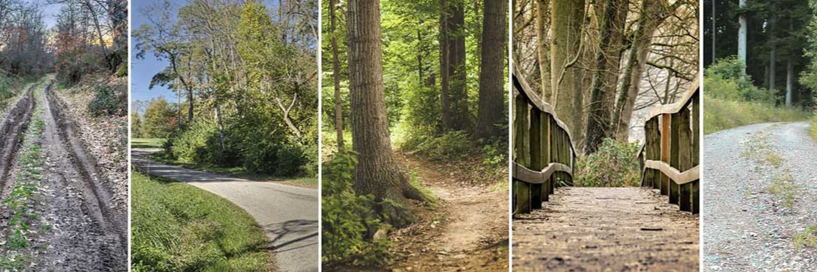 Our Favorite Bicycles for Every Trail | Spoke Life Staff Picks