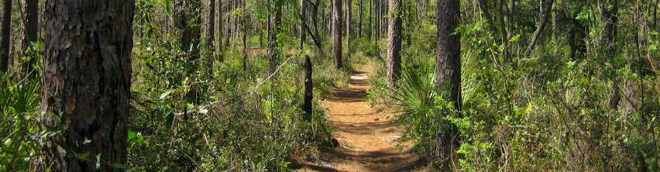 Local Trails in Santa Rosa Beach, FL.