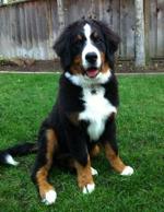 Ruby: Shop Dog