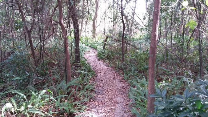 Volunteer | Mount Dora MTB Trails