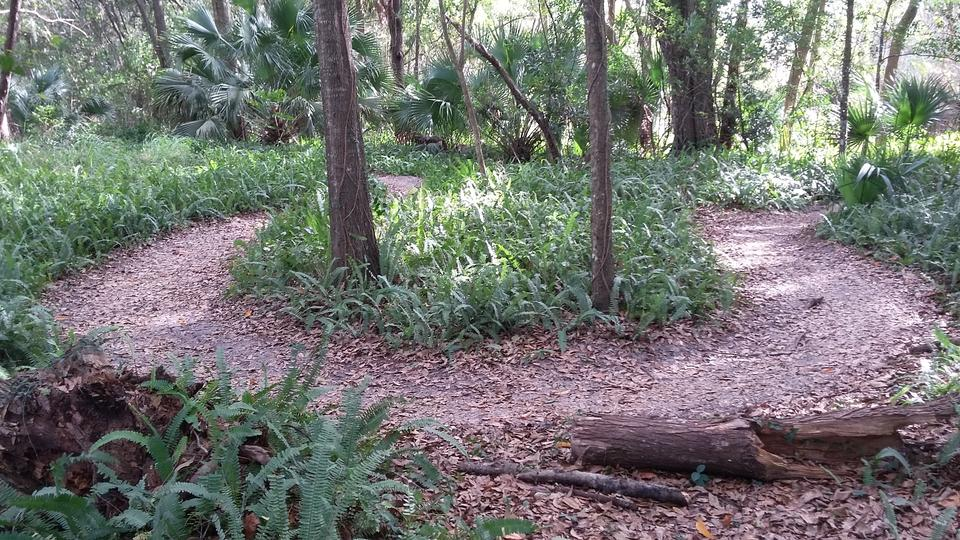 Mt Dora Mountain Bike Trails