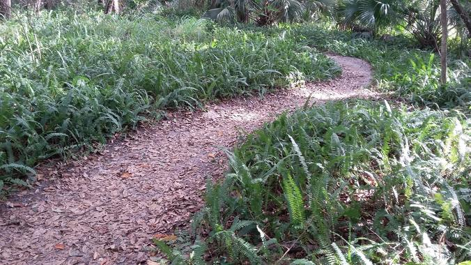 Florida Single Track | Mount Dora MTB Trails
