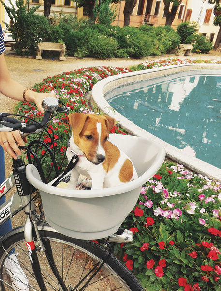 Bellelli Pet basket, Pluto handlebar mount