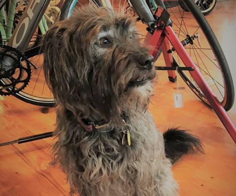 Finley - shop dog