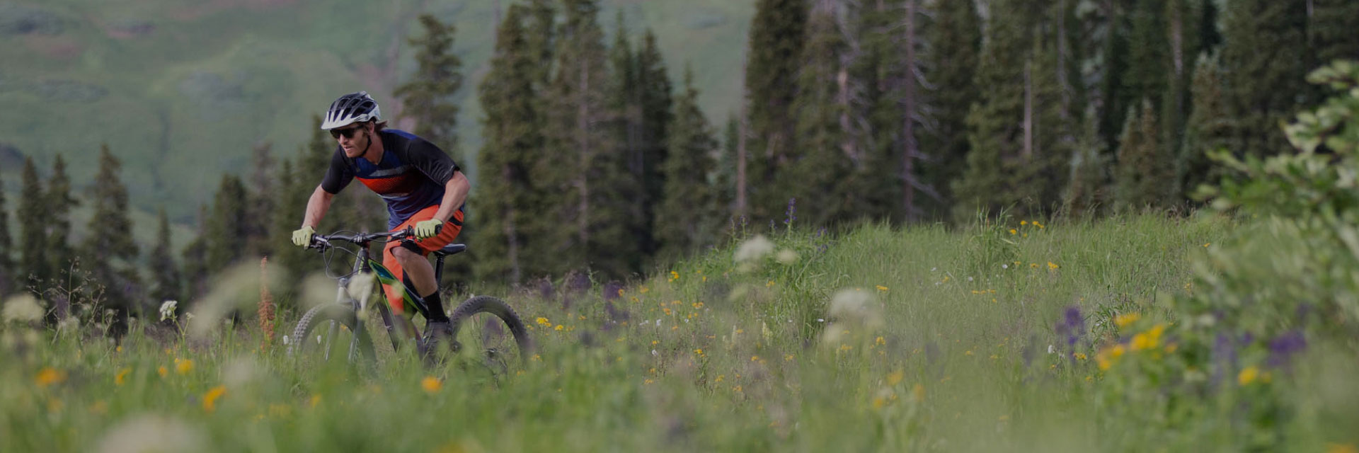Man riding through wild flowers on mountain bike.