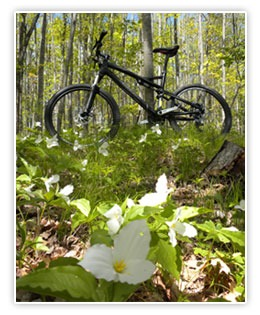 Bike in forest amongst trillium