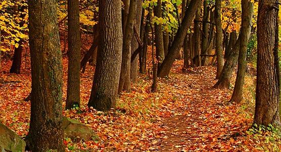 Washington Valley Park