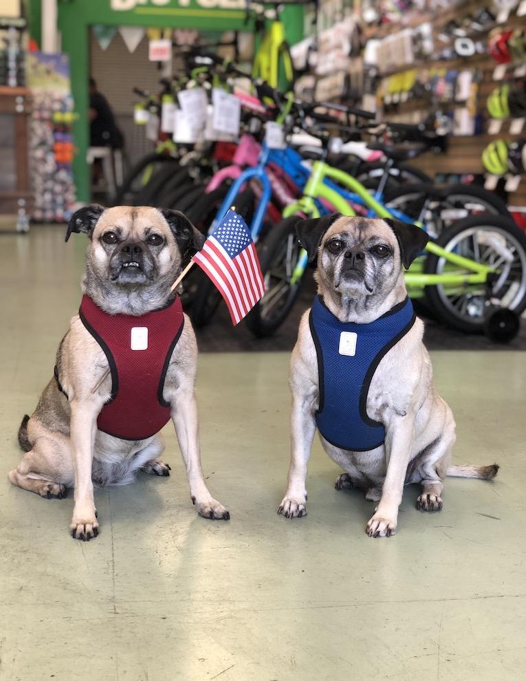 Chloe & Zorro: shop dogs