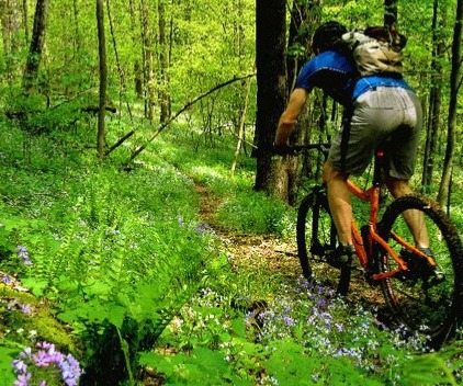 Mountain biker riding in the forest