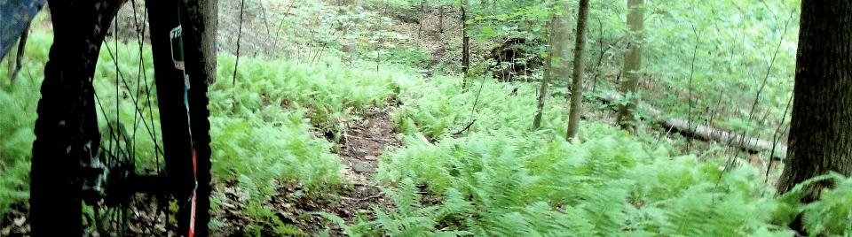 Mountain biker riding on a trail
