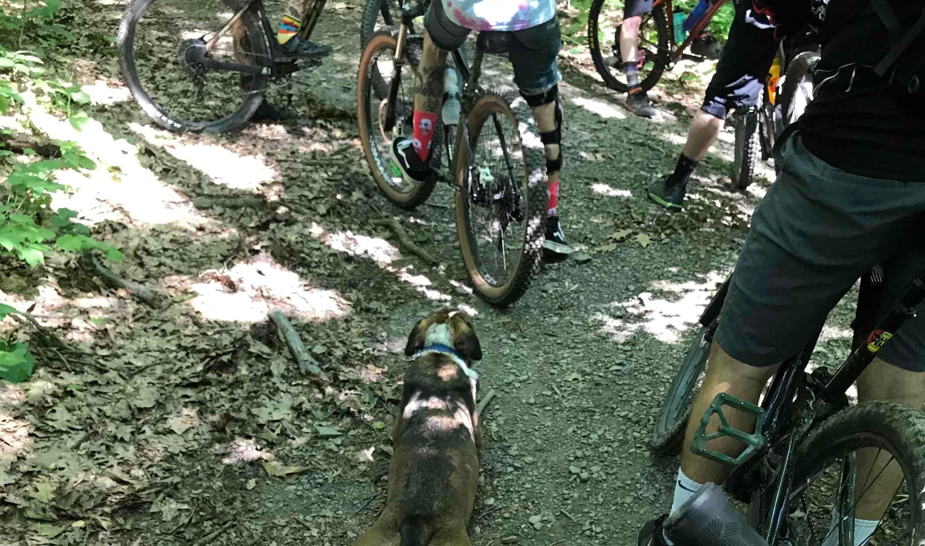 group mountain biking dog sploot