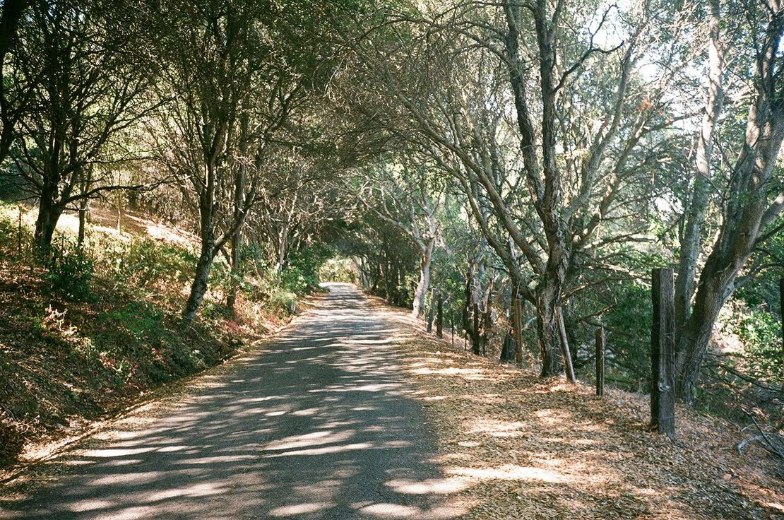El Toyonal road