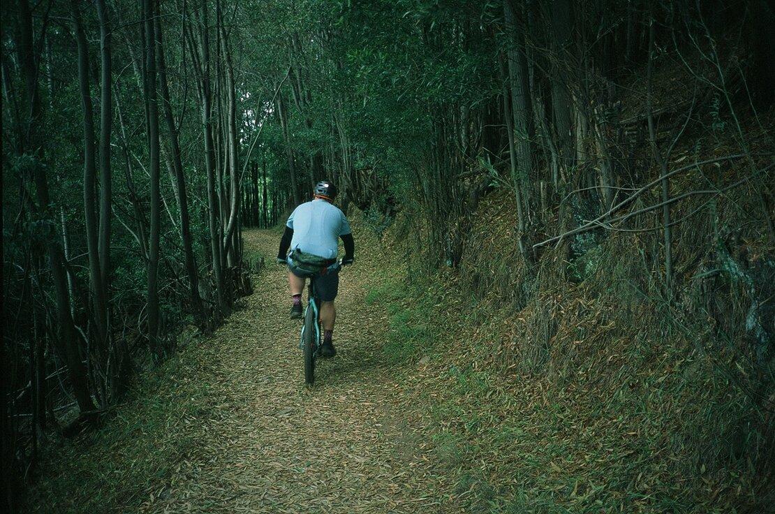 Sequoia Bayview Trail, Joaquin Miller Park