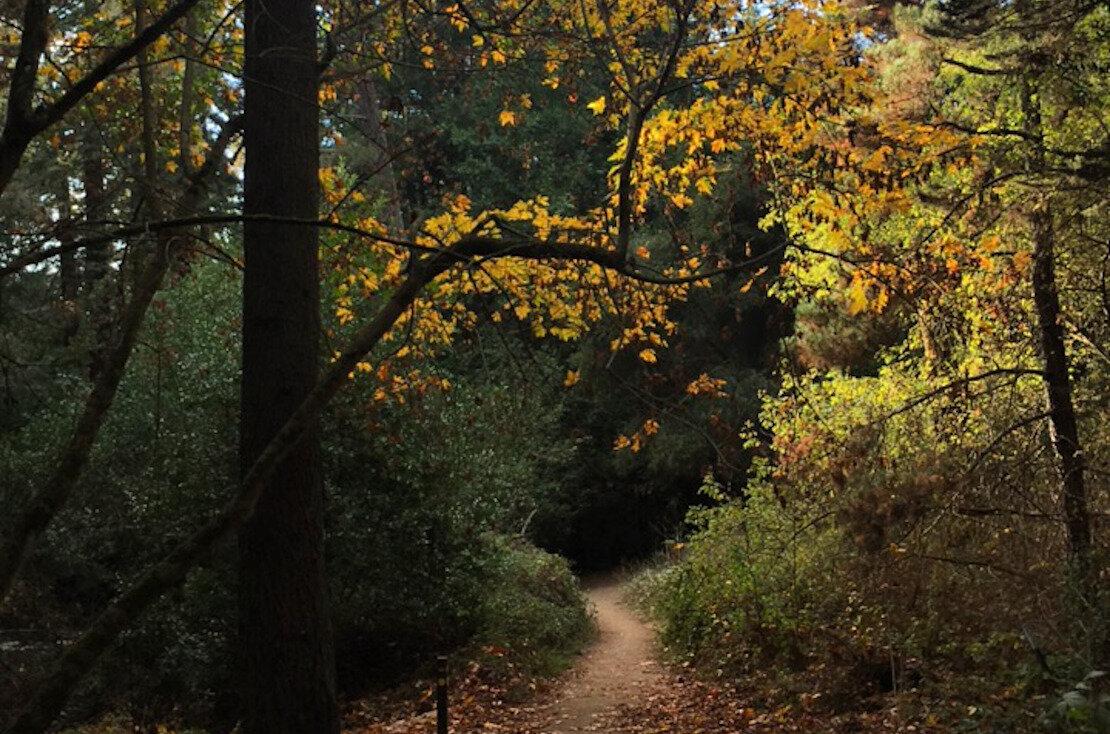 Fall on Sunset trail
