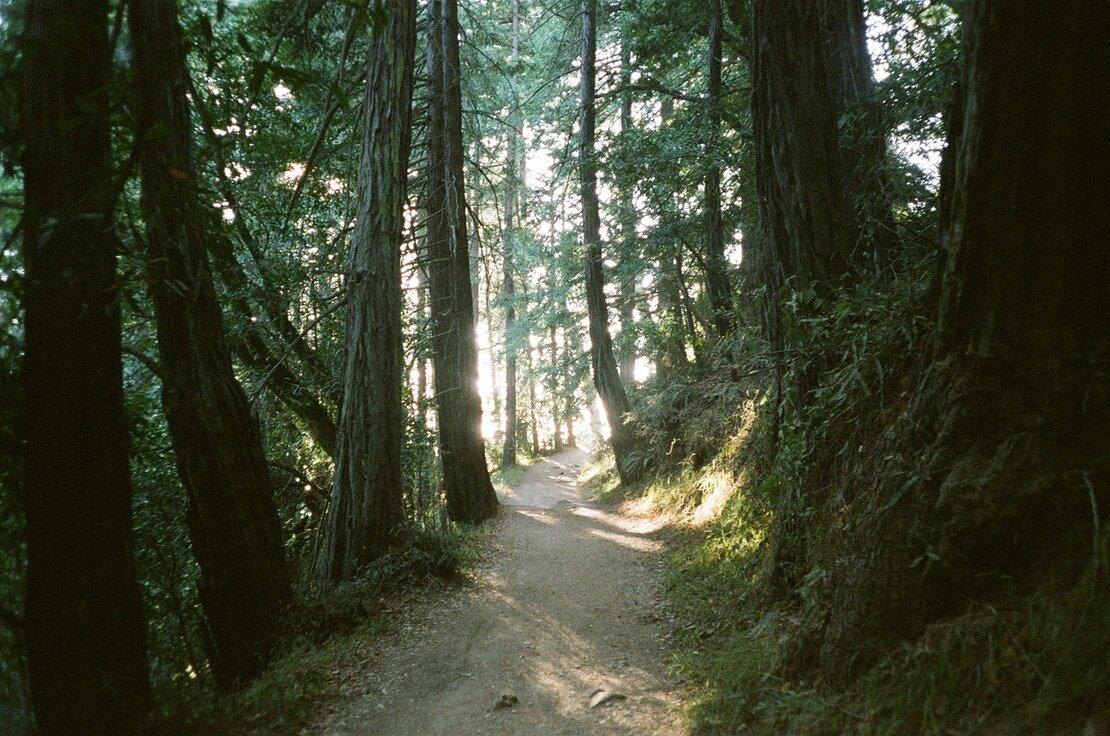 Trail in Joaquin Miller Park, Oakland