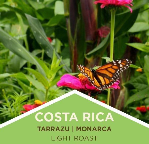Coffee | Costa Rica | Tarrazu | Monarca | Washed | Ground