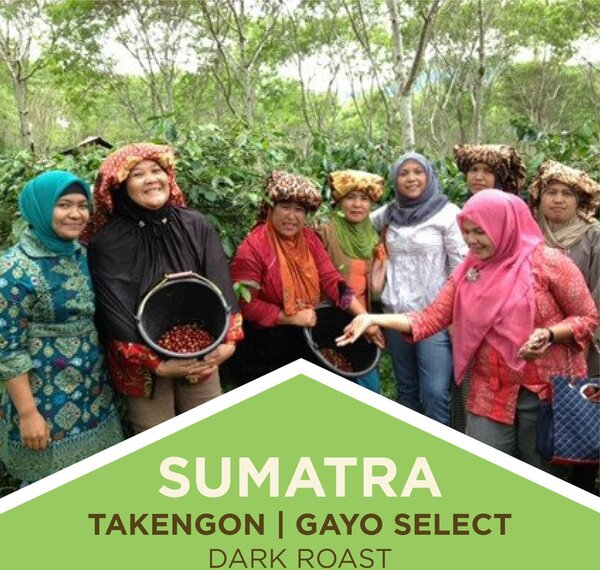 Coffee | Sumatra | Takengon Gayo Select | Dark Roast | Whole Bean