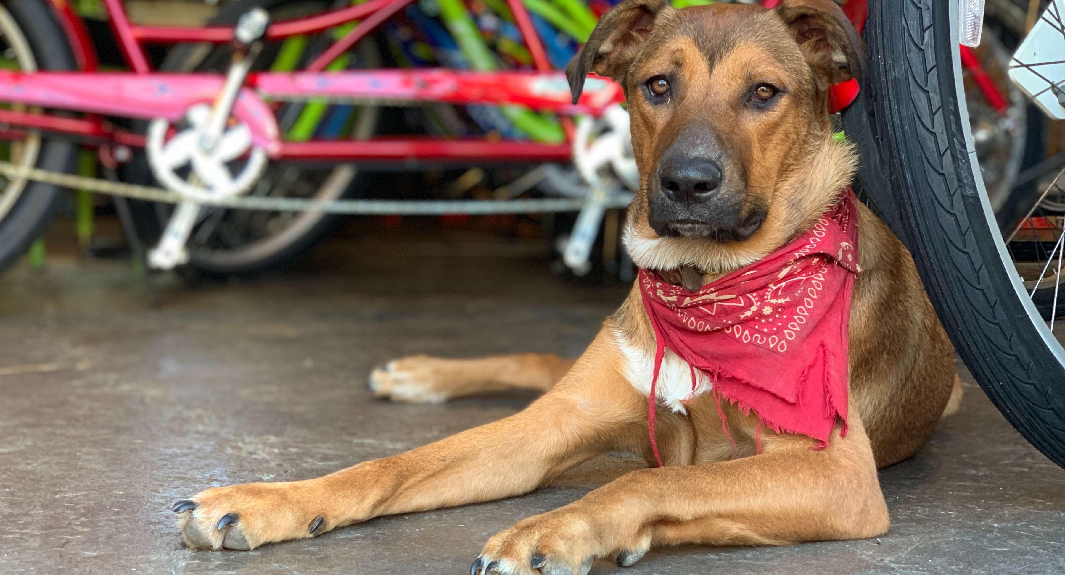 Shop dog pic