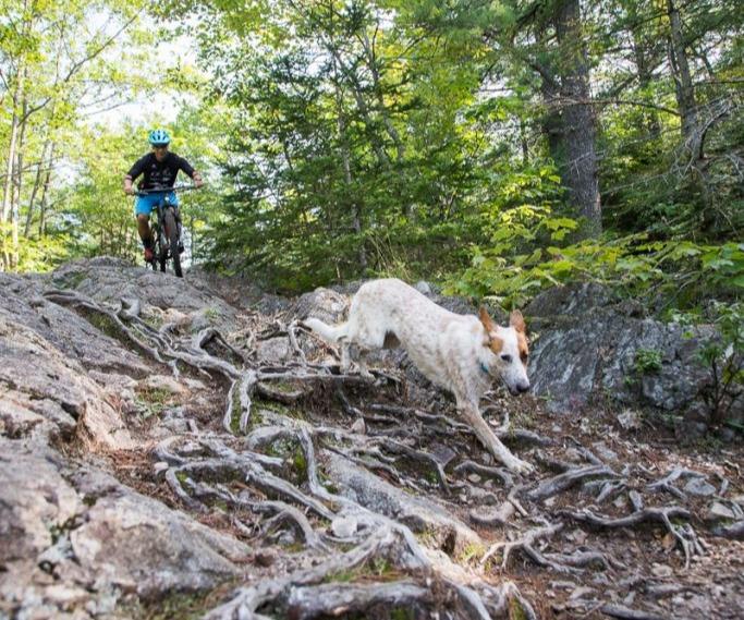 Hiawatha Mountain Bike Trails