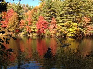 Trees with orange leaves on a lake