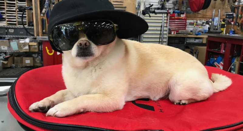 shop dog wearing sunglasses and a hat