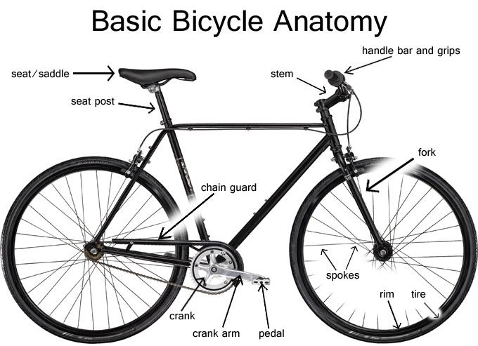 Outstanding Basic Bicycle Anatomy 101 Frame South Carolina Bike Shop Wiring Digital Resources Funiwoestevosnl