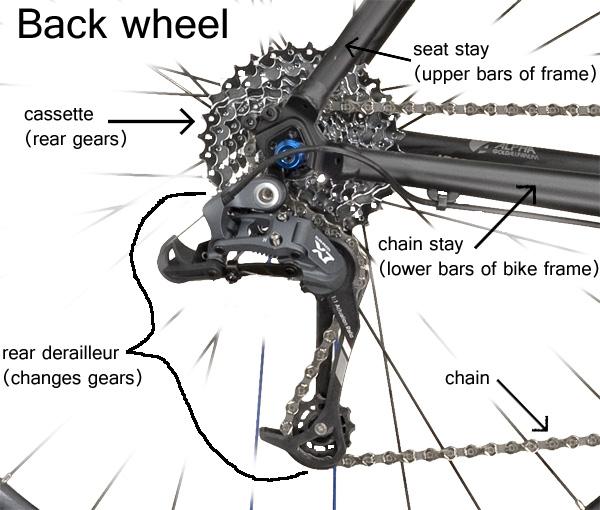 Basic Bicycle Anatomy 101 Back End South Carolina Bike Shop