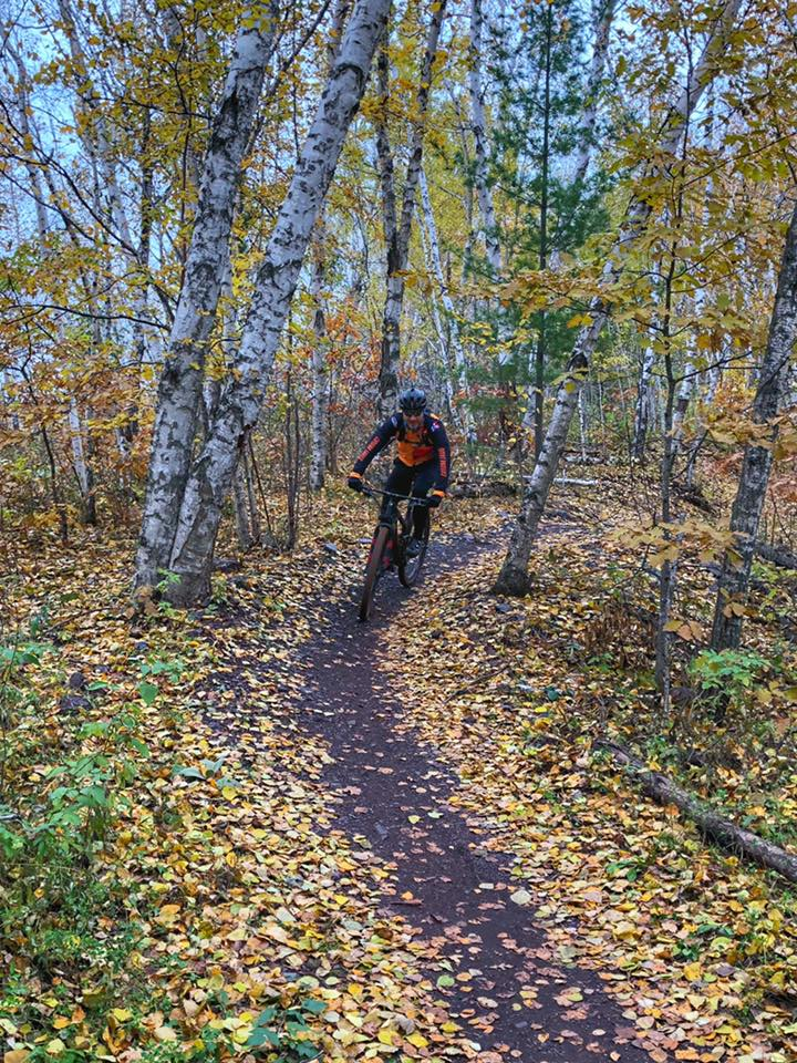 mountain biker riding through birch trees